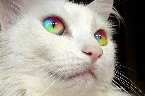 inspiring photo of a cat with rainbow eyes